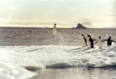 Penguin Popper