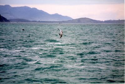 Dusky Dolphin Scenery